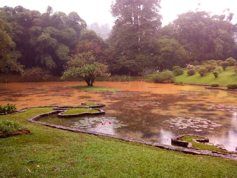Дождливый Ботанический Сад, Канди. Шри-Ланка.