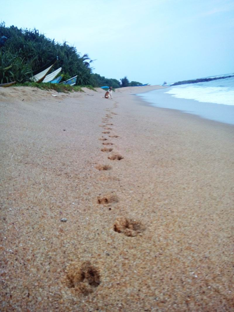 Пляж в Мириссе, Шри-Ланка.