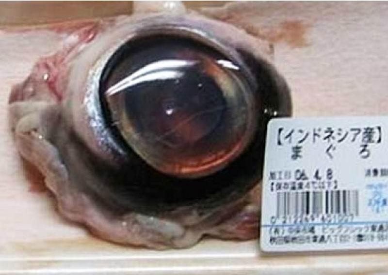Глаз тунца.