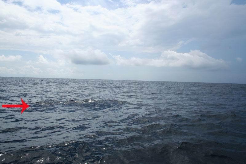 Спина голубого кита.