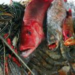 Где поесть и купить морепродукты в Мириссе?