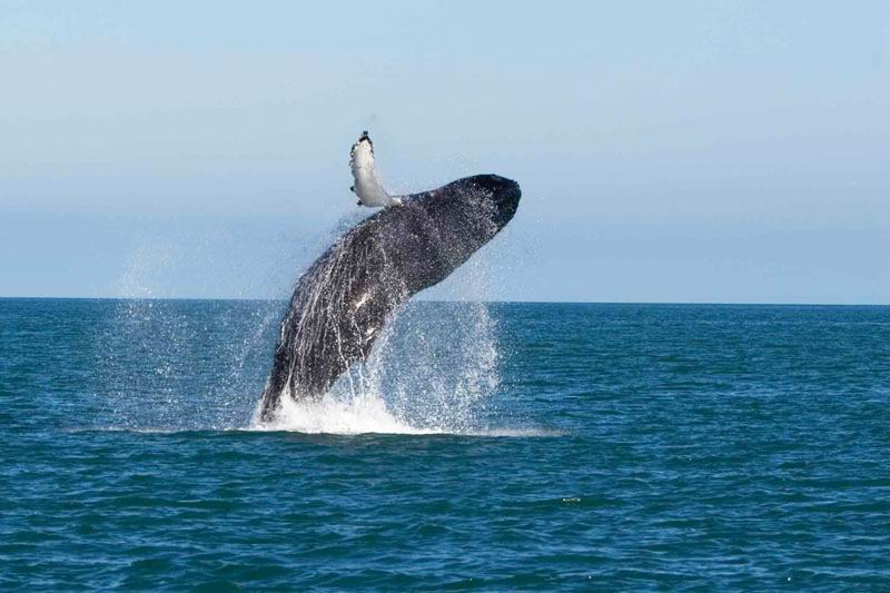 Шри-Ланка киты.