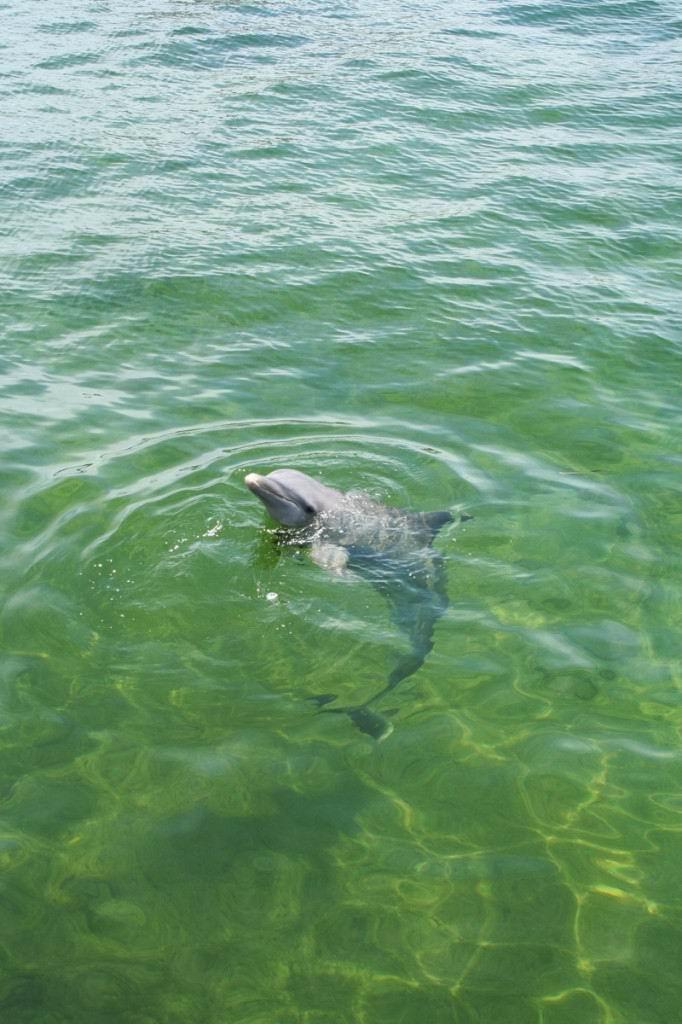 Дельфинарий, Куба.