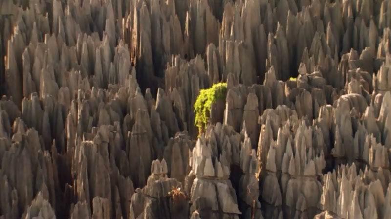 Мадагаскар. Непроходимый лес, выросший в скалах.